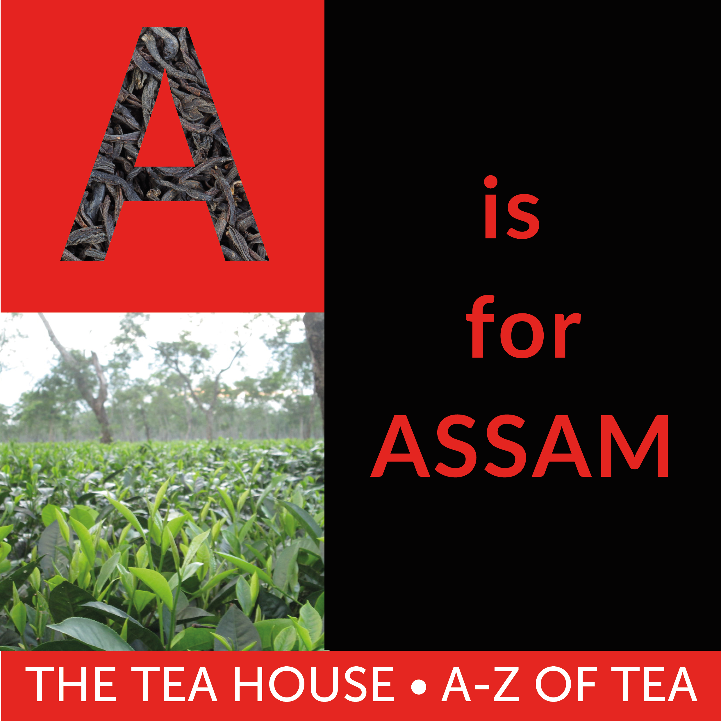 A is for Assam