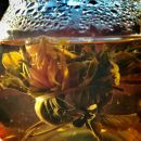 Camellia Vanilla Flowering Tea